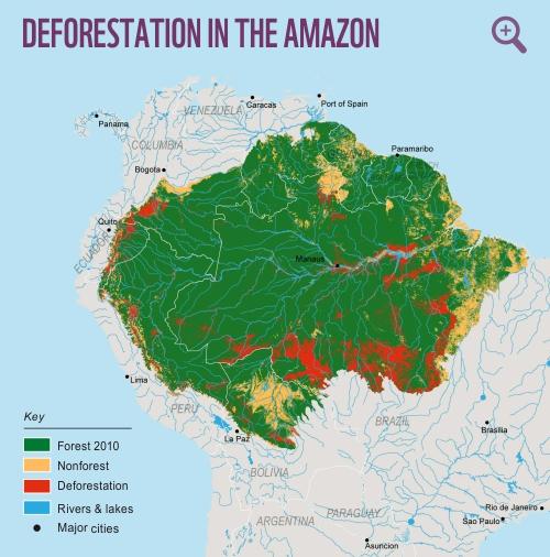 composition on deforestation