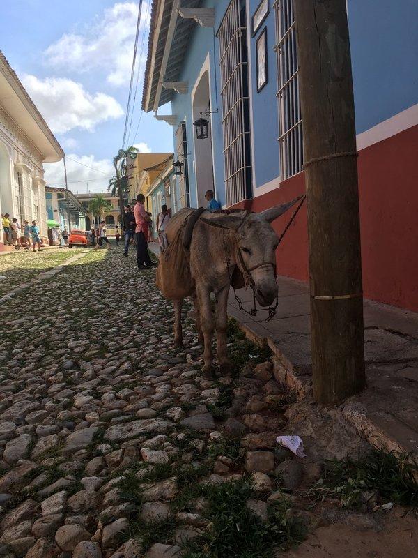 large_happy_donkey.jpg