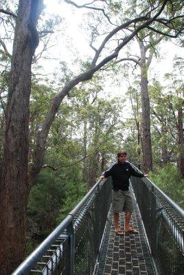 Valley of the Giants tree-top walk!