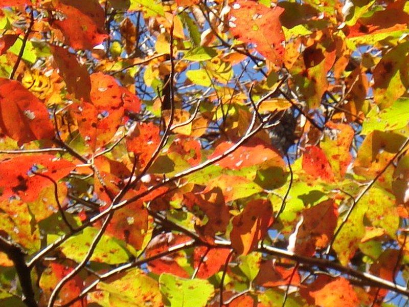 Buffall National River - leaf colours close