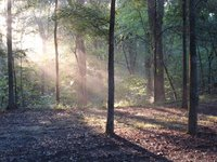 Early morning camp site in Natchez Trace, Mississippi