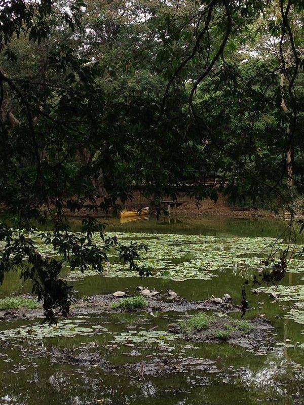 Floating turtles