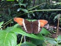 Papillons en folie_2