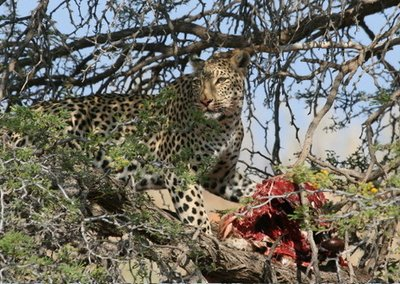 Kalahari Safari with Lathita Travel