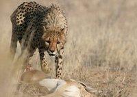 Kalahari Safari with Lathita Travel