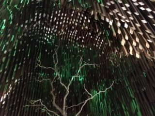 Tree of Knowledge at night