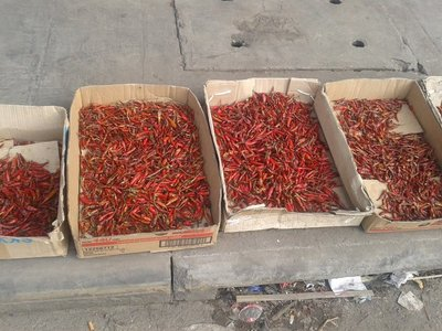 Drying Chillies