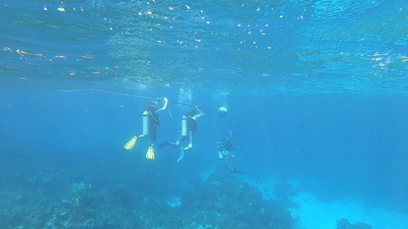 large_Underwater.jpg