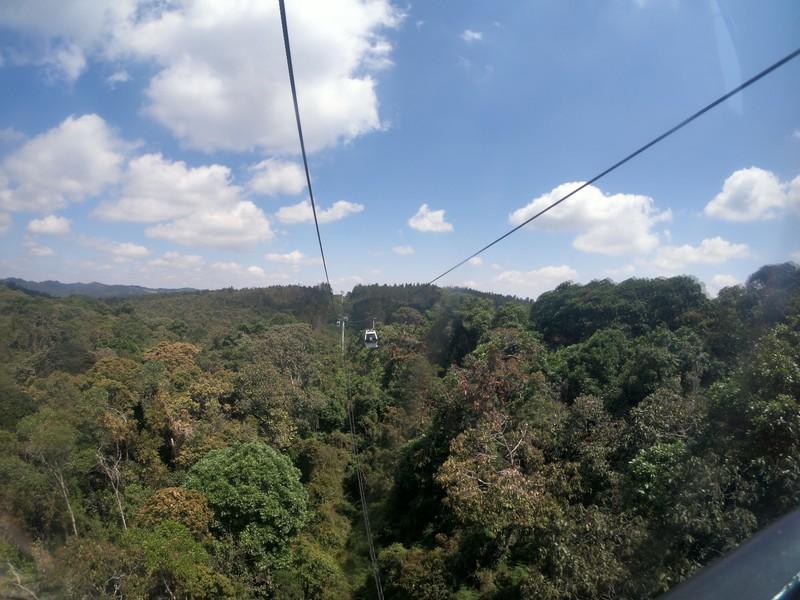 large_forest.JPG