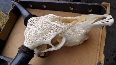 Carved skull at auction next to our camp