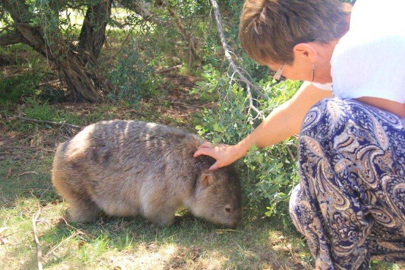 Friendly Wombat