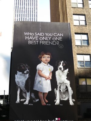 Ad_for_Dogs.jpg