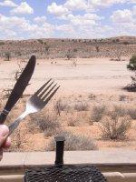 Kalahari - Ostrichs are coming for diner 2013