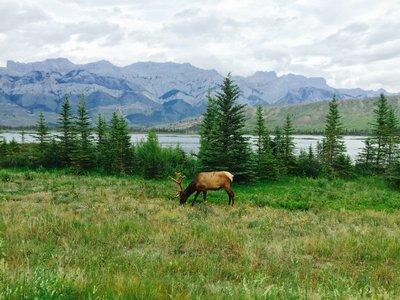 Canadian Rockies- Banff, Jasper, Lake Louise (26)