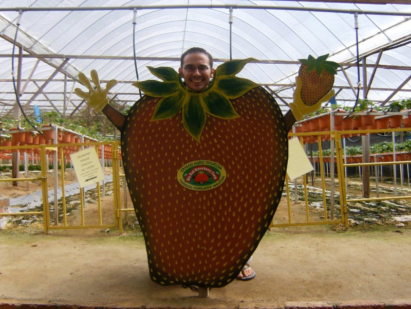Steve at Big Red Strawberry Farm (2)