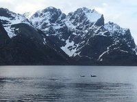 Orcas visiting Reine Fjord