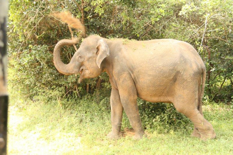 Yala National Park Elephant Dust Shower