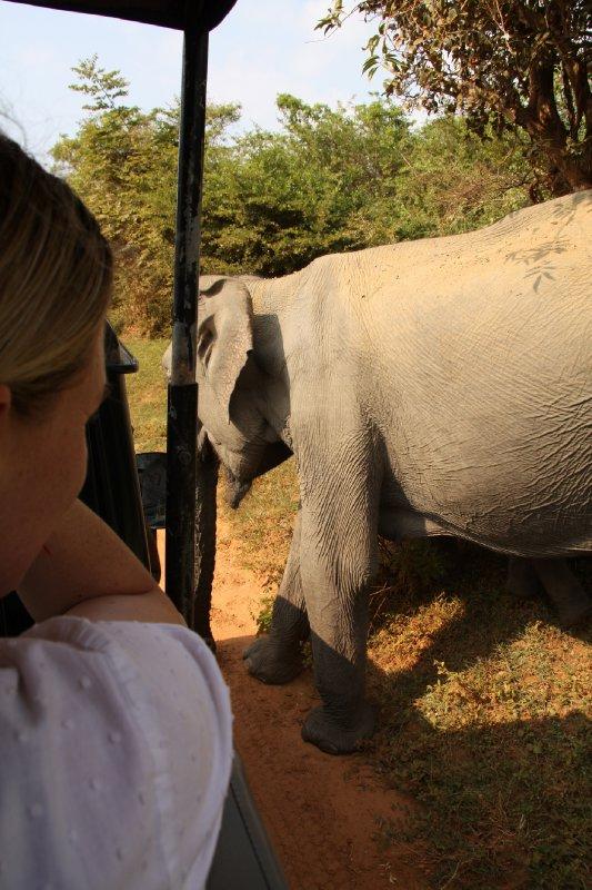 Yala National Park Jen on Safari