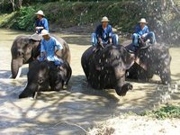 Mahouts at Thai Elephant Conservation Park