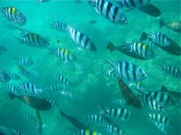 Vanuatu Waters alive with fish