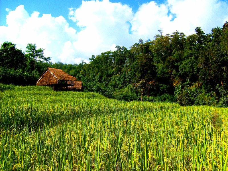 Countryside, Northern Thailand