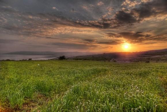 Israeli Fields