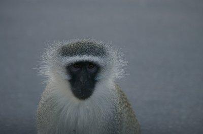 Hello Monkey