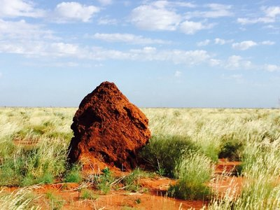 The termite mounds were smaller here.