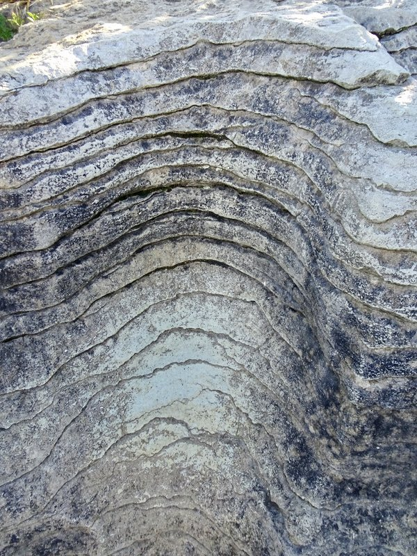 This is a close up look of a section of the Pancake Rocks.The rocks were originally formed on the ocean floor with alternating layers of sandstone and limestone. Earthquakes then lifted the ocean floor up, and the wind and rain eroded away the softer sandstone creating the horizontal slices or stacks of pancakes.