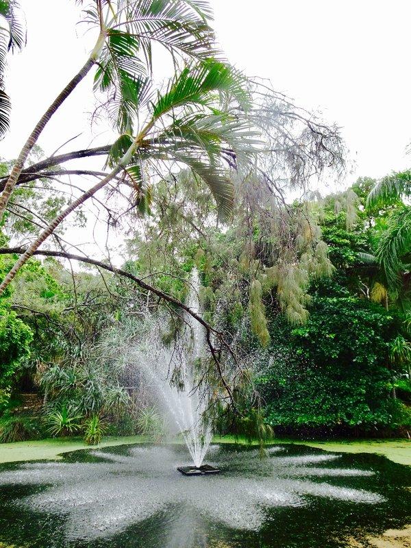 The Botanic Gardens at Hervey Bay.
