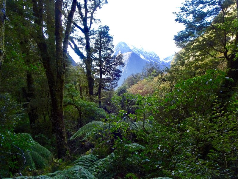 """A view of Darran Range as seen while walking to """"The Chasm."""""""