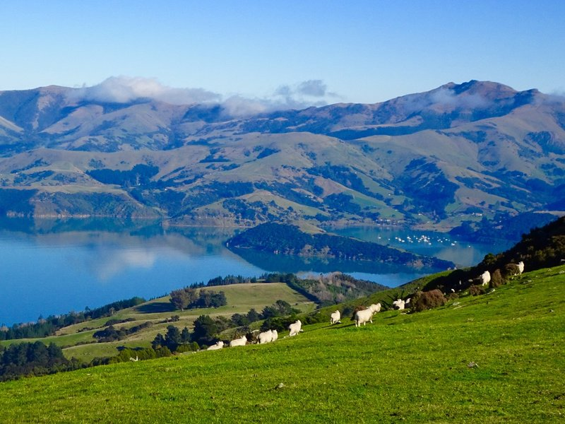 Another view from the Summit Road of the Banks Peninsula.