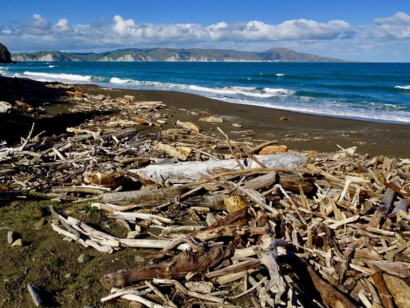 On the way to the Mahia Peninsula, we saw these dark sand beaches, tons of driftwood, and the peninsula's white cliffs in the distance.