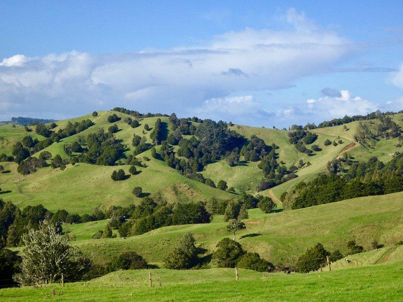 The farmland near the Waipu Caves.