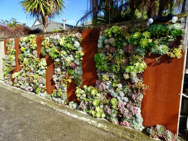 Hone's Garden in Russell, NZ...I thought this was a cute wall...it's actually the entrance to a pizza restaurant. Ha