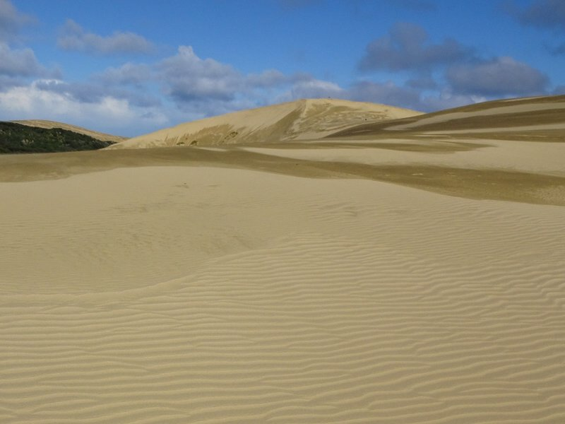 Along 90 Mile Beach, we stopped at the Giant Te Paki Sand Dunes. We walked on them, but a lot of people were using sand boards for sand surfing.