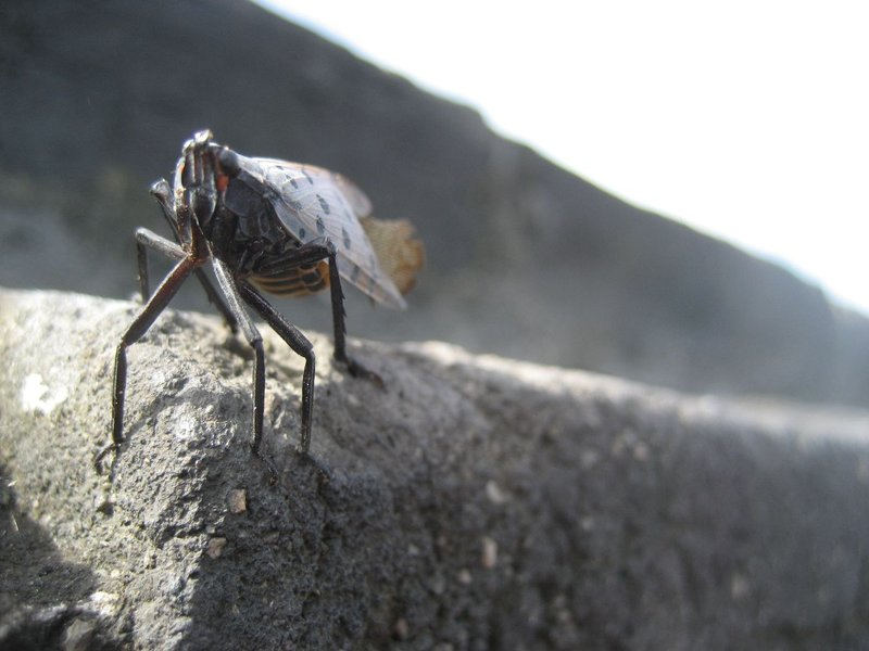Beijing - Bug at Great Wall
