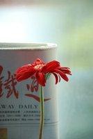 Train to Shanghai - Flower