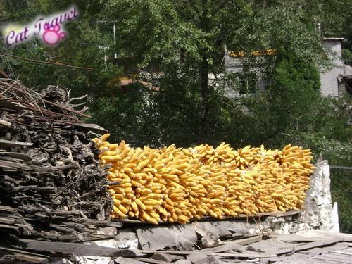 Shangri-la tour--Taoping Tibetan Village 7