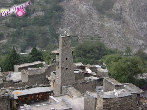 Shangri-la tour--Taoping Tibetan Village 3