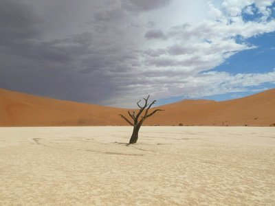 Dead Camel Thorn Tree in Hidden Vlei, Sossusvlei  Namibia