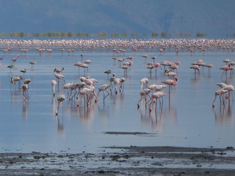Flamingos in Lake Natron, Tanzania