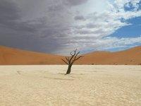 Dead Camel Thorn Tree in Hidden Vlei, Sossusvlei  Namibia