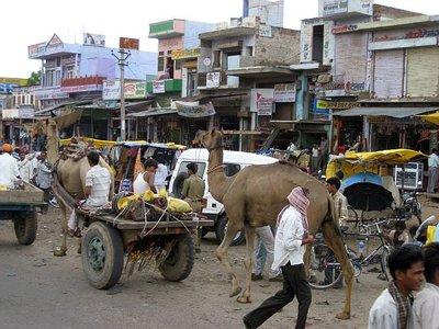 Camels-street_life.jpg