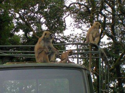 Monkey_family.jpg