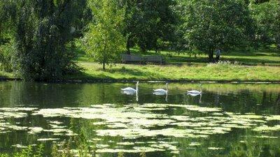 Swan_on_the_lake.jpg