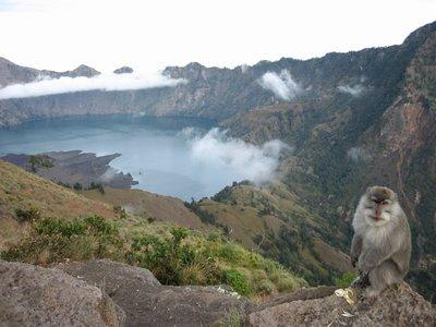 Indonesia_GunungRinjani_Monkey