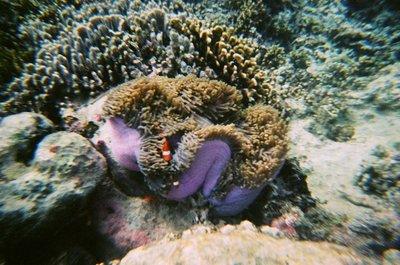Indonesia_..er_Nemo.jpg