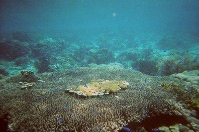 Indonesia_..lueFish.jpg
