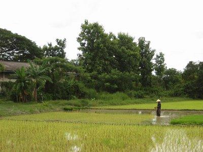 Laos_Vientiane_Fields.jpg